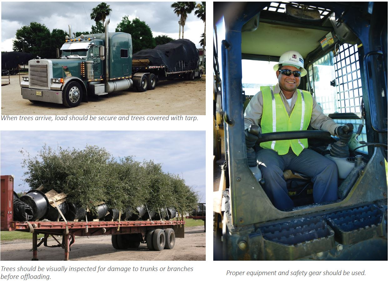 Shipping-receiving-trees