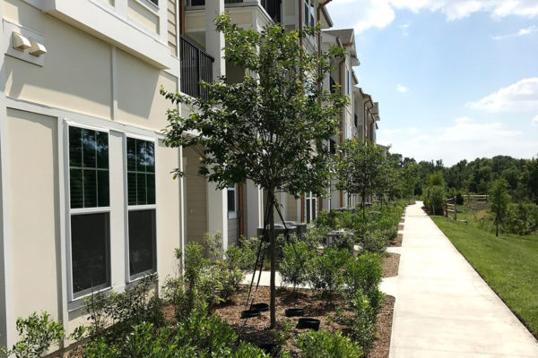 Cherrylake's landscaping of the complex mimics the architecture as upscale and artfully designed.