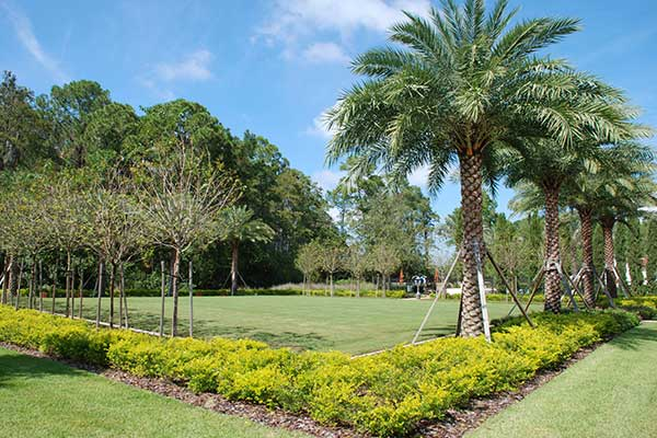 The use of palms in Golden Oaks create a tropical vacation atmosphere.