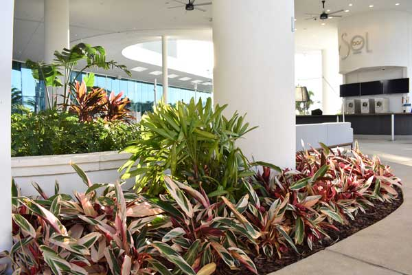 Aventura Hotel is the third Universal owned hotel which Cherrylake has landscaped.