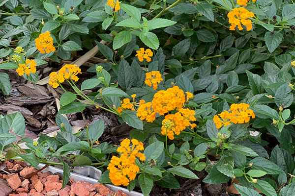Bright, colorful plantings can be found throughout Aventura Hotel's landscape.